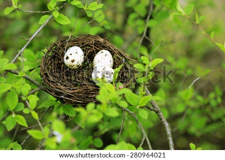 Wicker nest with eggs over green tree background stock photo