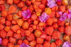 Wicker wicker basket with fresh colored red orange pink pink flowers of Bouganvillea and Physalis in the garden on the ground in closeup as a colorful colorful pattern