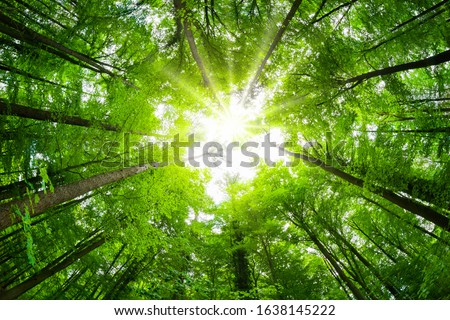 Wide-angle canopy shot in a beautiful green forest, magnificent upwards view to the treetops with fresh green foliage and the sun Foto stock ©