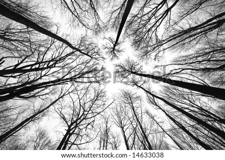 black and white pictures of trees. trees in lack and white