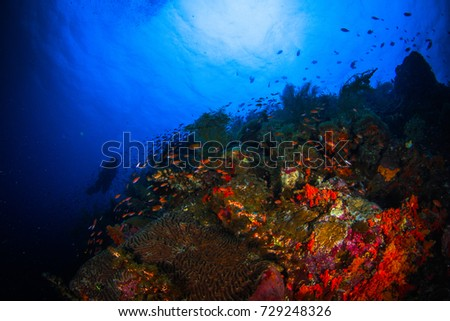 Wide angle photography. Landscape with reefs, slops and walls of the Indian ocean. Macro shot. Close up. Banda sea, Indonesia. #729248326