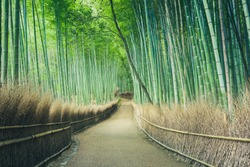Wide angle photos Of the paths in the green bamboo groves are peaceful and shady