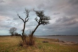 wide angle picture of a silhouette of a small leafless tree in front of grey cloudy sky at a november afternoon