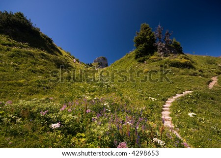 Unusual Wide Angle Shot Of Alpine Garden With Flowers Schynige Platte  With Licious Wide Angle Shot Of Alpine Garden With Flowers Schynige Platte Switzerland With Amazing How To Garden Flowers For Beginners Also Garden City Mall In Addition Large Garden Lantern And Easter Island Garden Statues Uk As Well As Qvc Gardening Products Additionally Hairdresser Covent Garden From Shutterstockcom With   Licious Wide Angle Shot Of Alpine Garden With Flowers Schynige Platte  With Amazing Wide Angle Shot Of Alpine Garden With Flowers Schynige Platte Switzerland And Unusual How To Garden Flowers For Beginners Also Garden City Mall In Addition Large Garden Lantern From Shutterstockcom