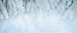 Wide Angle Toned Soft Winter Christmas background with snowy fir tree branches, macro. Beautiful Nature template with falling snow. Panoramic Winter Billboard or Web banner With Copy Space For Text