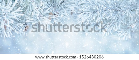 Wide Angle Toned Soft Winter Christmas background with snowy pine tree branches, macro. Beautiful Nature scenery with falling snow, selective focus. Panoramic Winter template With Copy Space For Text Foto stock ©