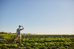 Wide angle view at one male worker holding loaded cart and looking away while standing at vegetable plantation outdoors against blue sky, copy space