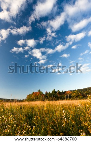 Wide angle view of a large open meadow full of goldenrod and other flowers in early autumn, with blue sky and white clouds overhead on a sunny day. Quintessential fall photo!