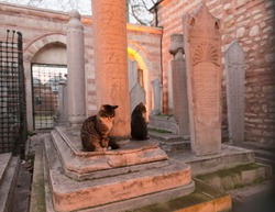 Wide angle view of an Ottoman graveyard with gravestones and two cats at dusk, with tungsten lights