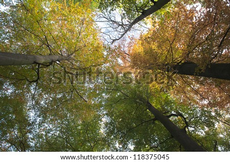 wide angle view of trees
