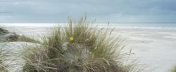 Wide beach at the North Sea