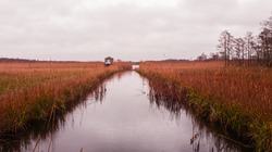 Wide ditch with brownish reeds on both sides captured on a moody and rainy winter day at the Naarder lake in the Netherlands. On the left side there is a trail leading to a bird watching hut.