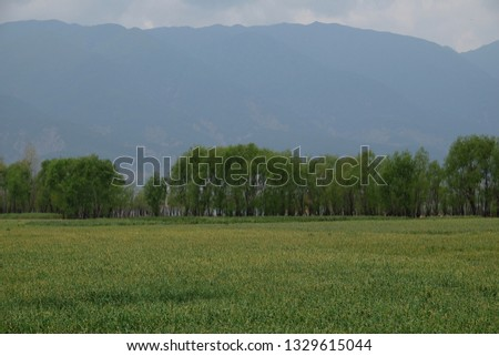 Wide green farmland at afternoon. Mountains and trees background. Relaxing Idyllic countryside scenery. In Dali Yunnan China  #1329615044