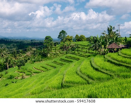 Wide green rice terraces at Bali - stock photo