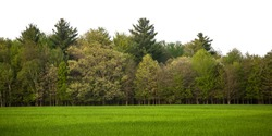 Wide, isolated landscape including vibrant green grass and a full tree line set against a solid white background. Tree line includes a variety of tree types, sizes, heights and shades of green.