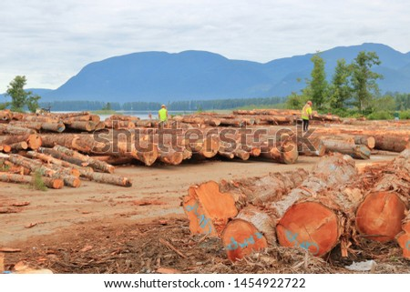 Wide landscape view of a log yard and inspectors rating and marking the cedar inventory.