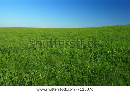 Wide open green grass field with clear blue sky.