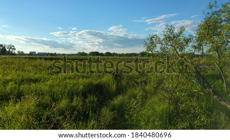 Wide open green marge and field with blue skies Photo stock ©