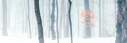 Wide panorama of snowy forest at foggy winter day.