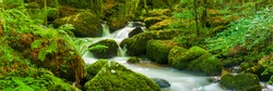 Wide panoramic shot of small waterfalls amongst lush vegetation and trees in a beautiful woodland setting.