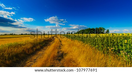 Wide perspective rural scenery and warm evening light