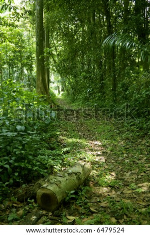 wide shot photo of a walking path in the tropical forest or jungle