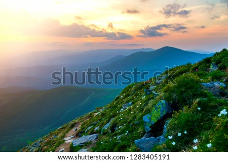 Wide summer mountain panorama at dawn. Beautiful white flowers blooming in green grass among big rocks and mountain range under pink sky before sunrise. Tourism, ecology and beauty of nature concept. #1283405191