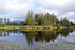 Wide view of glassy smooth and reflecting water where forest and marsh coincide.