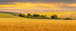 Wide wheat field and trees in the distance during sunset in golden tones