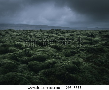 wide wild moss field in Iceland with a dramatic cloudy sky and mountains in the misty background with a moody atmosphere during a rainy day dwith a grey background and green foreground #1129348355