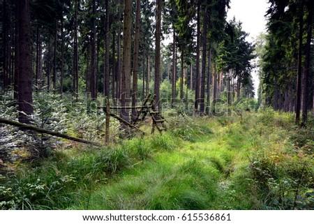 Wielki Las Luba?ski Zdjęcia stock ©