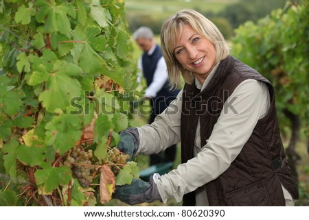 wife and husband working in their vineyard Stockfoto ©