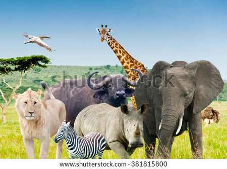 Wild African Animals In Savanna Collage 381815800