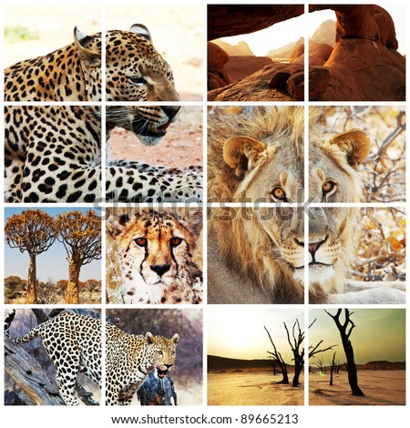 wild african cats collage
