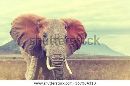 stock photo wild african elephant vintage effect national park of kenya africa 367384313 - Каталог — Фотообои «Животные»