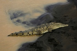 Wild American Crocodile (Crocodylus acutus) in a river sand bank. Dangerous reptile in muddy waters of Tarcoles, Carara National Park, Costa Rica, a famous tropical destination in Central America.