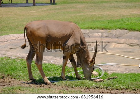 wild animal #631956416