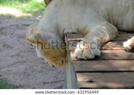 wild animal #631956449