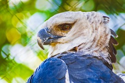 Wild animal at the zoo. Harpy eagle, endangered species in simulated habitat. Rare animal preservation. Captive breeding program. Fun family outing.