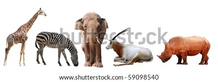 wild animal collection giraffe  zebra  elephant rhino antelope