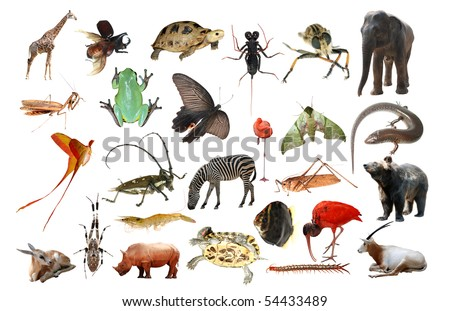 wild animal collection isolated in white - stock photo