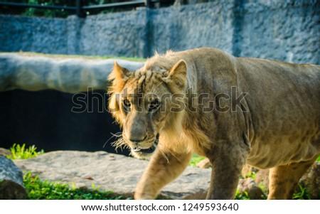 wild animal life