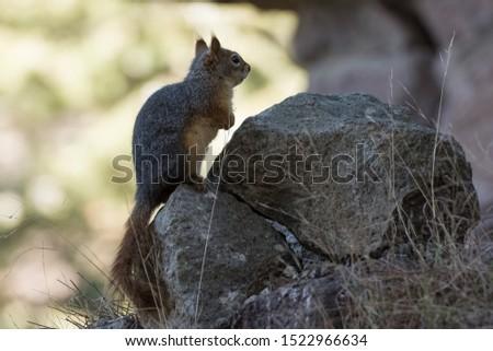 wild animals and wild animal photos