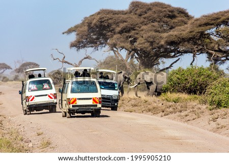 Wild animals are freely available. Herd of wild elephants grazes at the foot of Mount Kilimanjaro. Magical journey to Africa. Kenya. Amboseli. Car adventure for avid tourists  Сток-фото ©