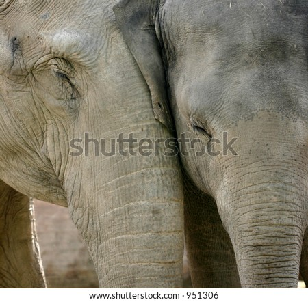 wild animals at the zoo of copenhagen, elephants in love