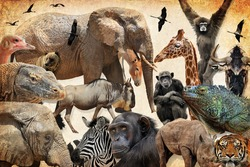 Wild animals, birds and reptiles. Elephant, wildebeest, giraffe, onager, lizard, cranes, chimpanzee, rhinoceros, bull, zebra, ostrich, tiger. Wildlife diversity and protection. Old paper texture