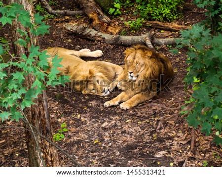 wild animals in the wild