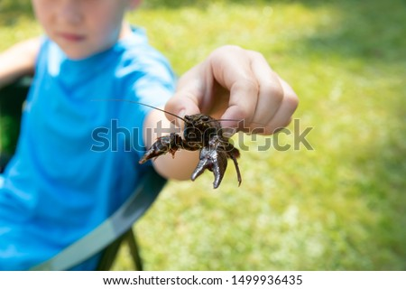 Wild animals in the wild. River crayfish in a clean European river.