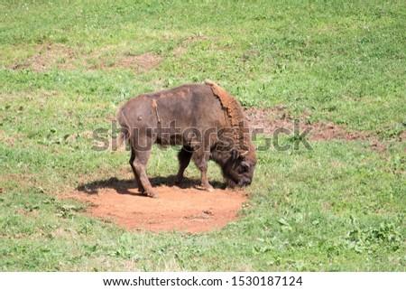 wild animals in their habitat