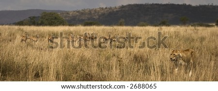 wild animals living in the serengeti national park, tanzania - africa